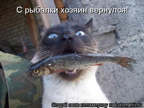 Котоматрица: С рыбалки хозяин вернулся!