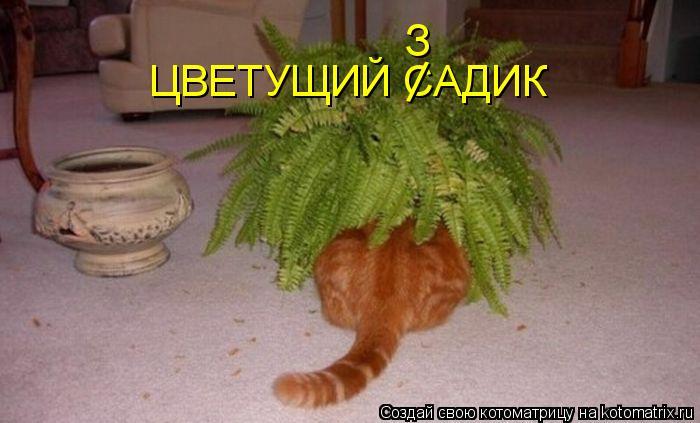 Котоматриця!)))) - Страница 3 888853