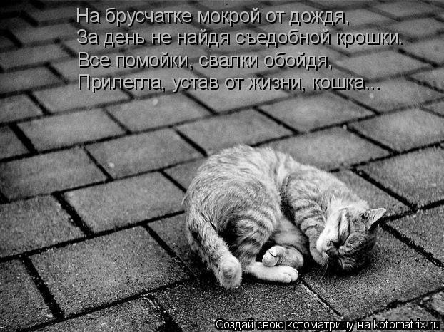 Котоматрица: На брусчатке мокрой от дождя, За день не найдя съедобной крошки. Все помойки, свалки обойдя, Прилегла, устав от жизни, кошка...