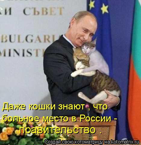Котоматрица: Даже кошки знают , что больное место в России -  правительство .
