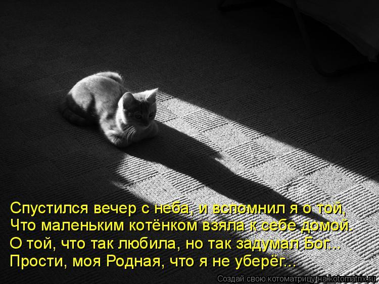 Котоматрица: Спустился вечер с неба, и вспомнил я о той, Что маленьким котёнком взяла к себе домой. О той, что так любила, но так задумал Бог... Прости, моя Р