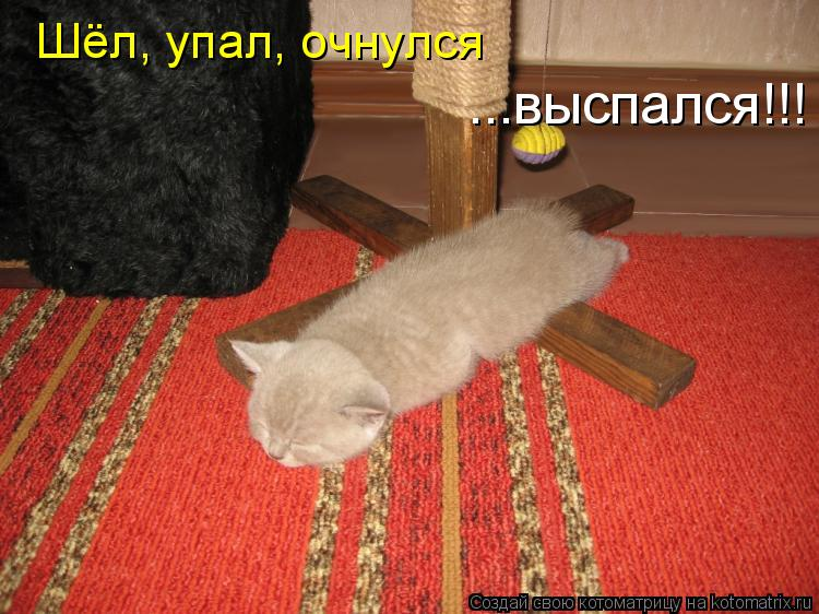 Котоматрица - Шёл, упал, очнулся ...выспался!!!