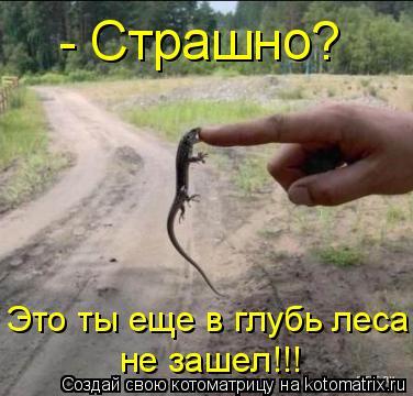 Котоматрица: - Страшно? Это ты еще в глубь леса не зашел!!!
