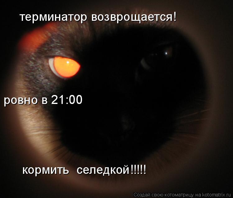 Котоматрица: терминатор возврощается! ровно в 21:00 кормить  селедкой!!!!!
