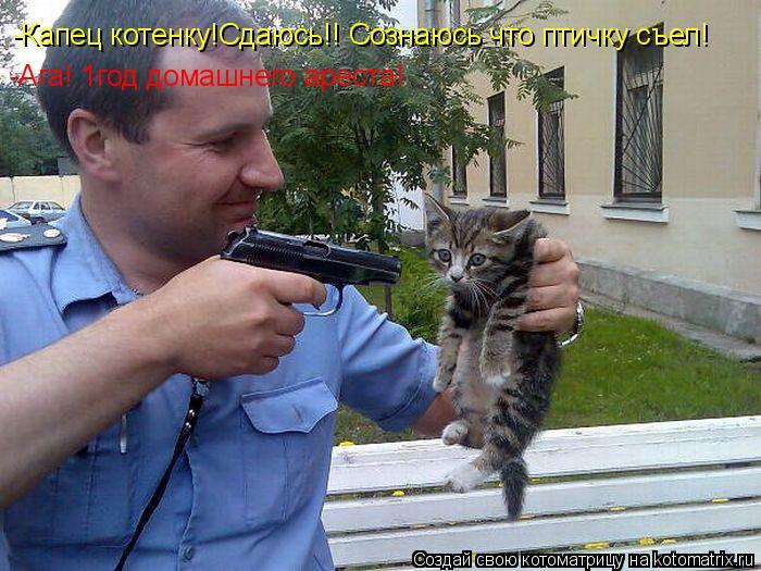 Котоматрица: -Капец котенку!Сдаюсь!! Сознаюсь что птичку съел! -Ага! 1год домашнего ареста!
