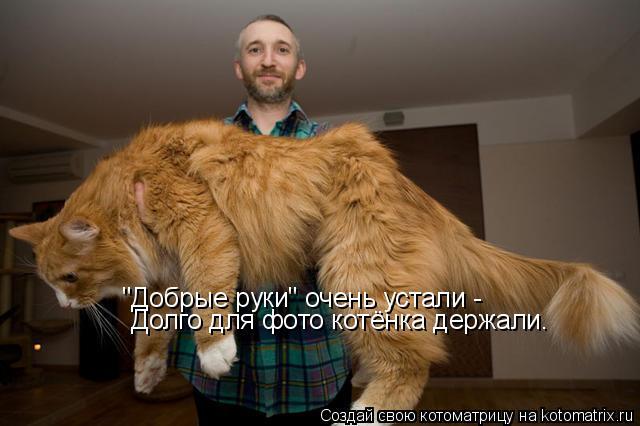 """Котоматрица: """"Добрые руки"""" очень устали - Долго для фото котёнка держали."""