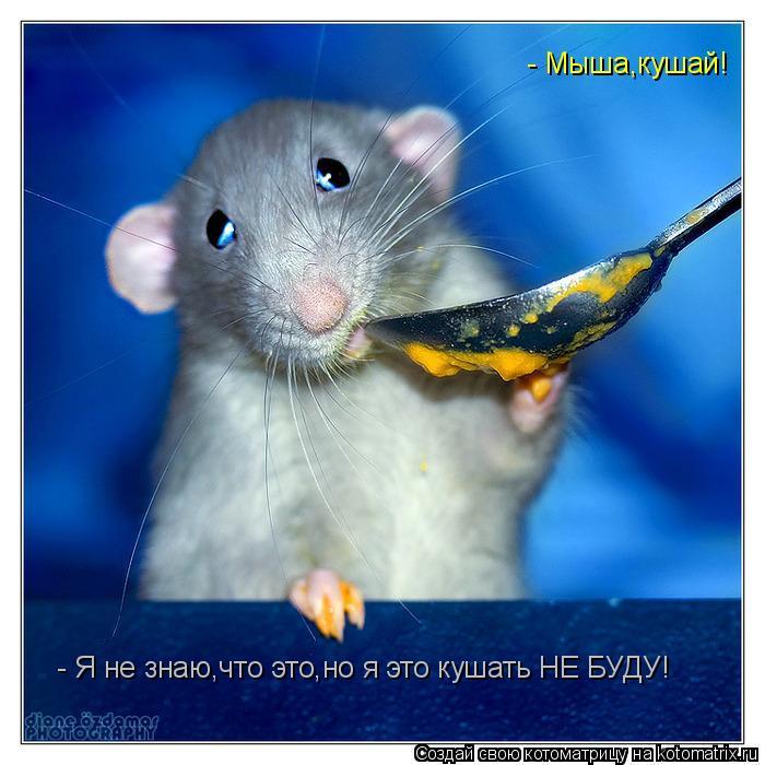 Котоматрица: - Мыша,кушай!  - Я не знаю,что это,но я это кушать НЕ БУДУ!