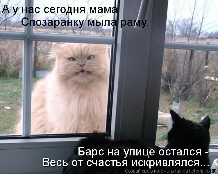 Котоматрица - А у нас сегодня мама Спозаранку мыла раму. Барс на улице остался -  Ве