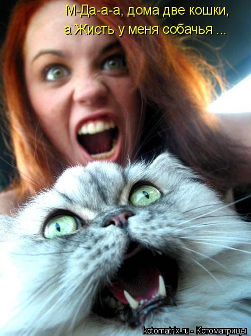 Котоматрица: М-Да-а-а, дома две кошки, а Жисть у меня собачья ...