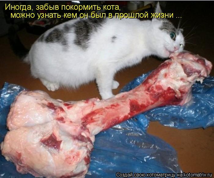 Котоматрица: Иногда, забыв покормить кота,  можно узнать кем он был в прошлой жизни ...