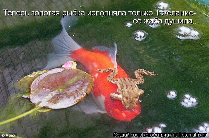 http://kotomatrix.ru/images/lolz/2011/04/22/890699.jpg