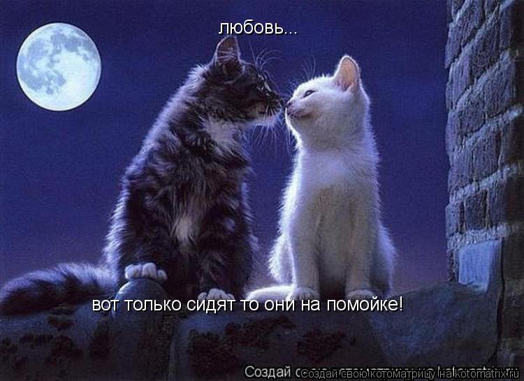 Котоматрица: любовь... вот только сидят то они на помойке!
