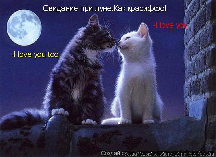 Котоматрица: Свидание при луне.Как красиффо! -I love you -I love you too