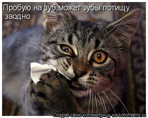 Котоматрица: Пробую на зуб,может зубы потищу заодно