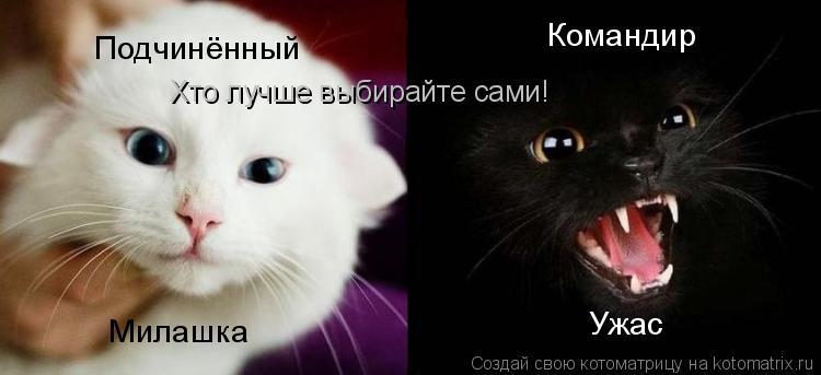 Котоматрица: Командир Подчинённый Ужас Милашка Хто лучше выбирайте сами!