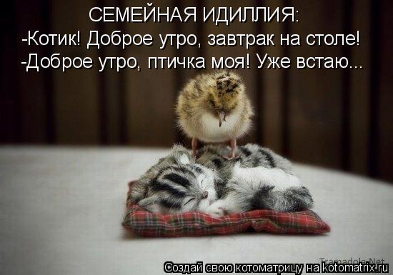 Котоматрица: -Котик! Доброе утро, завтрак на столе! -Доброе утро, птичка моя! Уже встаю... СЕМЕЙНАЯ ИДИЛЛИЯ: