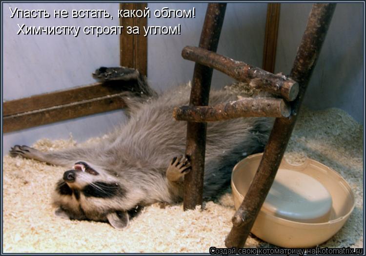 Котоматрица: Упасть не встать, какой облом! Химчистку строят за углом!
