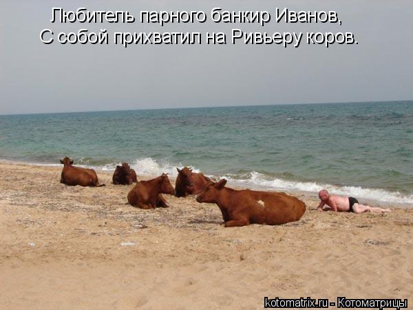 Котоматрица: Любитель парного банкир Иванов, С собой прихватил на Ривьеру коров.