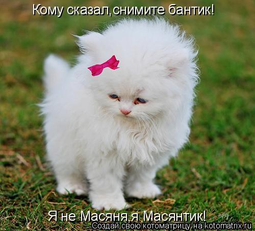 Котоматрица: Кому сказал,снимите бантик! Я не Масяня,я Масянтик!