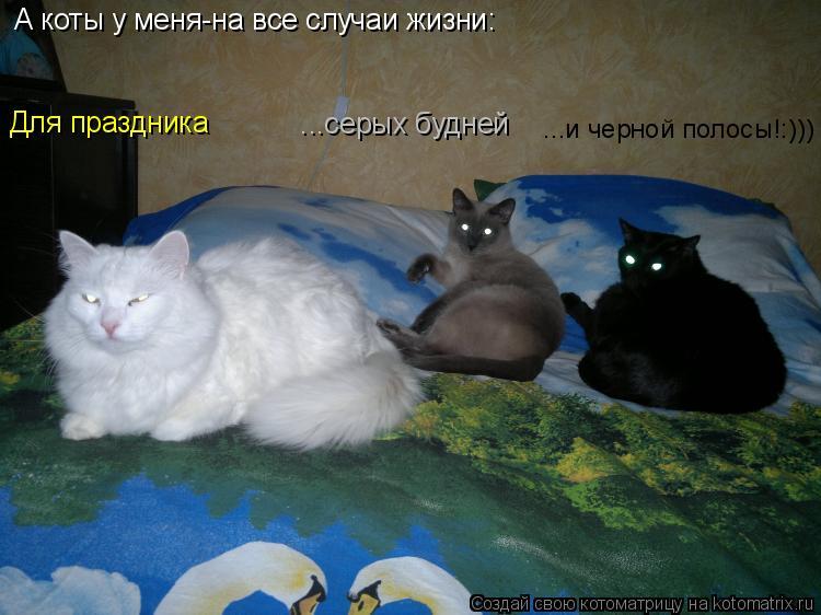 Котоматрица - А коты у меня-на все случаи жизни: Для праздника         ...серых будн