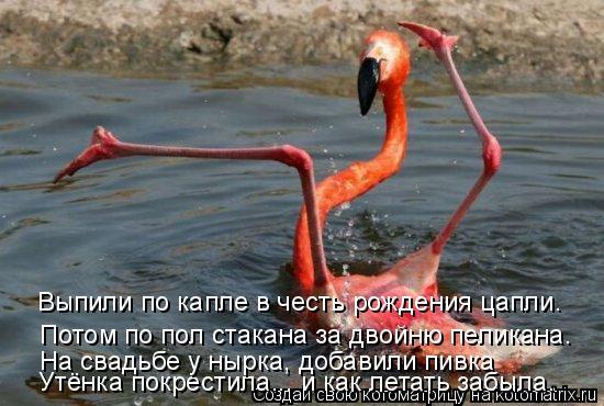 Котоматрица: Выпили по капле в честь рождения цапли. Потом по пол стакана за двойню пеликана.  Утёнка покрестила... и как летать забыла. На свадьбе у нырка,