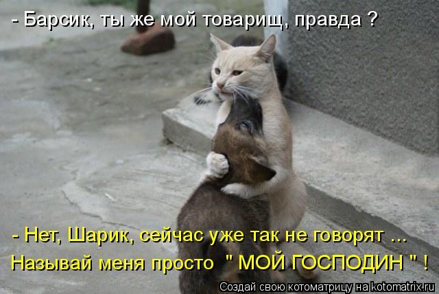 """Котоматрица: Называй меня просто  """" МОЙ ГОСПОДИН """" ! - Нет, Шарик, сейчас уже так не говорят ... - Барсик, ты же мой товарищ, правда ?"""