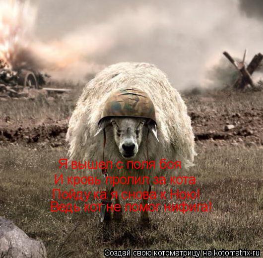 Котоматрица: Я вышел с поля боя  И кровь пролил за кота Пойду ка я снова к Ною! Ведь кот не помог нифига!