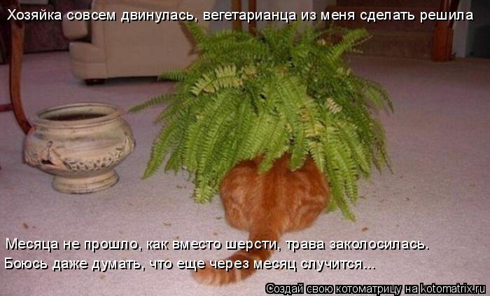 Котоматрица: Хозяйка совсем двинулась, вегетарианца из меня сделать решила Месяца не прошло, как вместо шерсти, трава заколосилась. Боюсь даже думать, ч