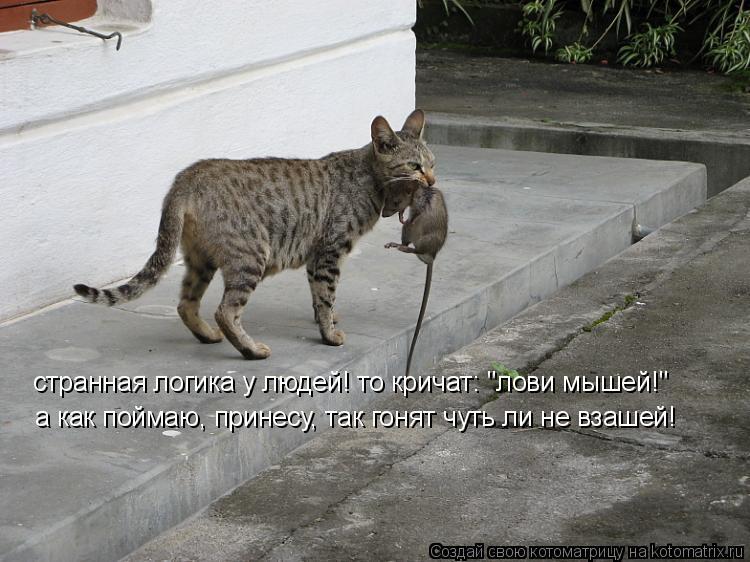 """Котоматрица: странная логика у людей! то кричат: """"лови мышей!"""" а как поймаю, принесу, так гонят чуть ли не взашей!"""