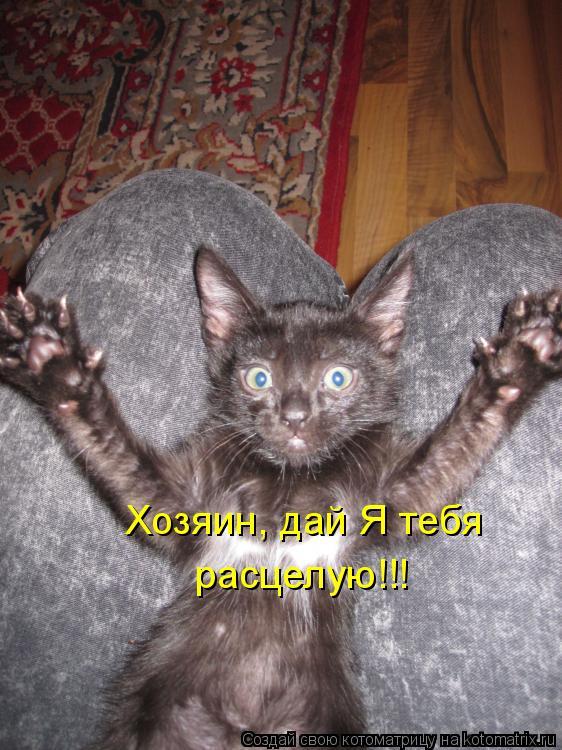 Котоматрица: Хозяин, дай Я тебя  расцелую!!!