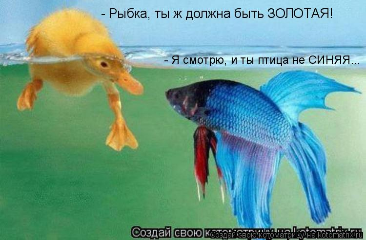 Котоматрица: - Рыбка, ты ж должна быть ЗОЛОТАЯ! - Я смотрю, и ты птица не СИНЯЯ...