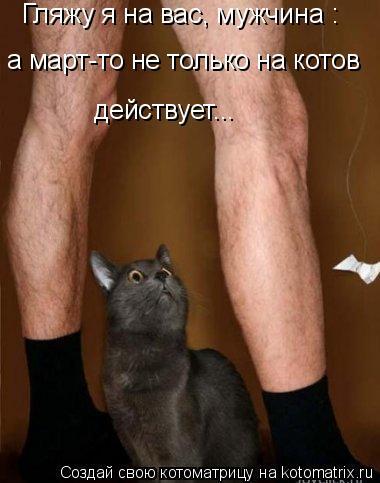 Котоматрица: Гляжу я на вас, мужчина :  а март-то не только на котов  действует...