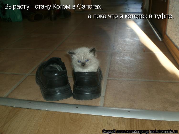 Котоматрица: Вырасту - стану Котом в Сапогах,  а пока что я котенок в туфле.
