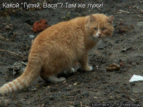 "Котоматрица: Какой ""Гуляй, Вася""? Там же лужи!"