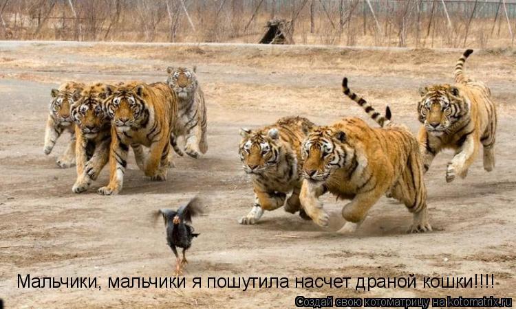 http://kotomatrix.ru/images/lolz/2011/04/26/893611.jpg
