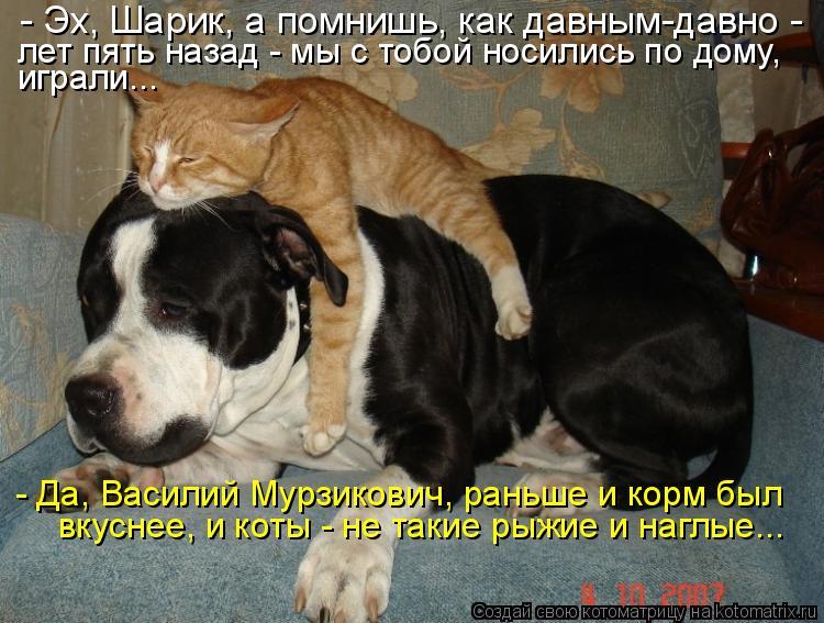 http://kotomatrix.ru/images/lolz/2011/04/26/893629.jpg