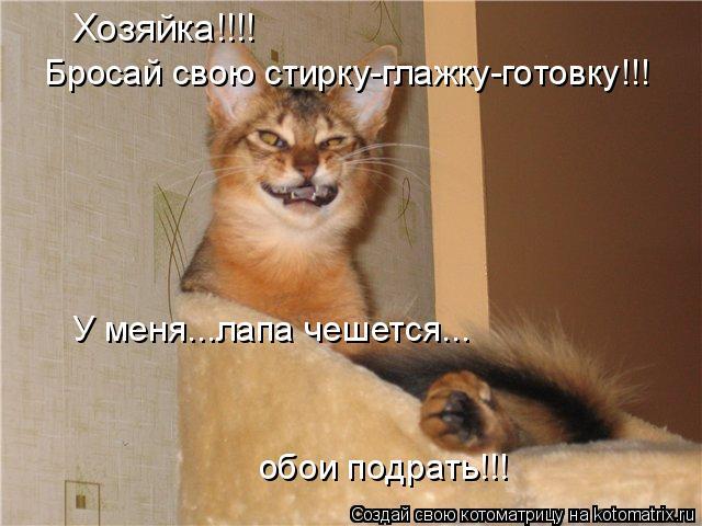 Котоматрица: Хозяйка!!!! Бросай свою стирку-глажку-готовку!!! У меня...лапа чешется... обои подрать!!!