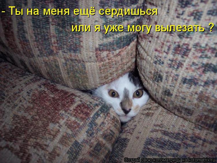 Котоматрица: - Ты на меня ещё сердишься или я уже могу вылезать ?