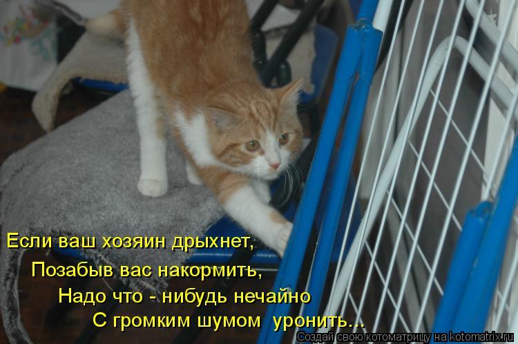 Котоматрица: Если ваш хозяин дрыхнет, Позабыв вас накормить, С громким шумом  уронить... Надо что - нибудь нечайно