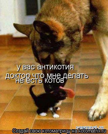 Котоматрица: у вас антикотия доктор что мне делать не есть котов