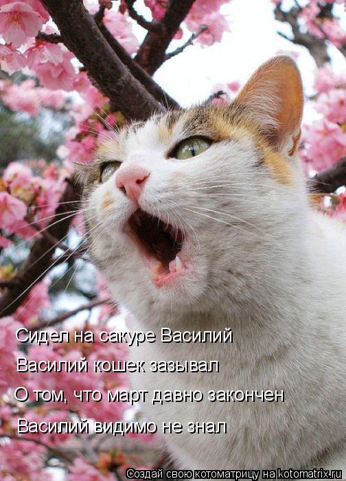 Котоматрица: Сидел на сакуре Василий Василий кошек зазывал О том, что март давно закончен Василий видимо не знал