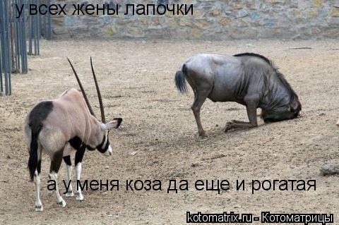 Котоматрица: у всех жены лапочки а у меня коза да еще и рогатая
