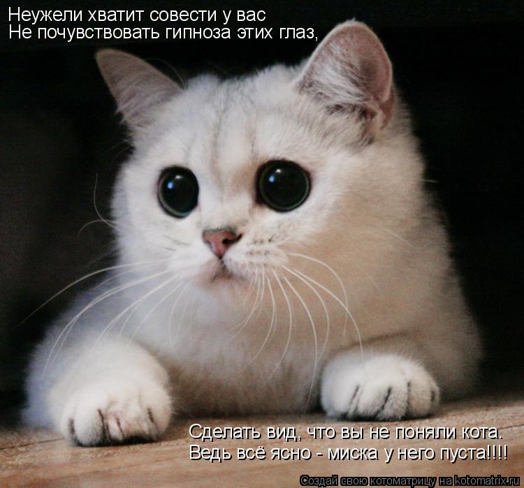 Котоматрица: Неужели хватит совести у вас Не почувствовать гипноза этих глаз, Не почувствовать гипноза этих глаз, Сделать вид, что вы не поняли кота. Вед