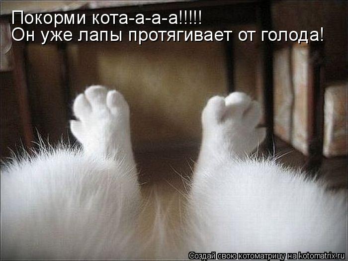 Котоматрица: Покорми кота-а-а-а!!!!! Он уже лапы протягивает от голода!