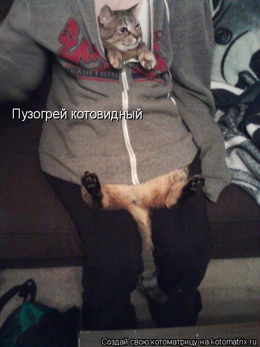 Котоматрица - Пузогрей котовидный