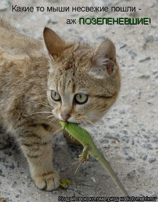Котоматрица: Какие то мыши несвежие пошли - аж ПОЗЕЛЕНЕВШИЕ!