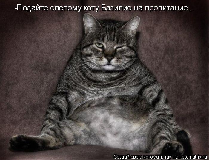 Котоматрица: -Подайте слепому коту Базилио на пропитание... -Подайте слепому коту Базилио на пропитание...