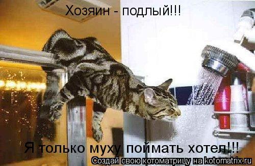 Котоматрица: Хозяин - подлый!!! Я только муху поймать хотел!!!
