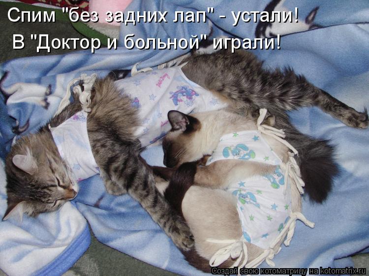 Котоматрица - Спим