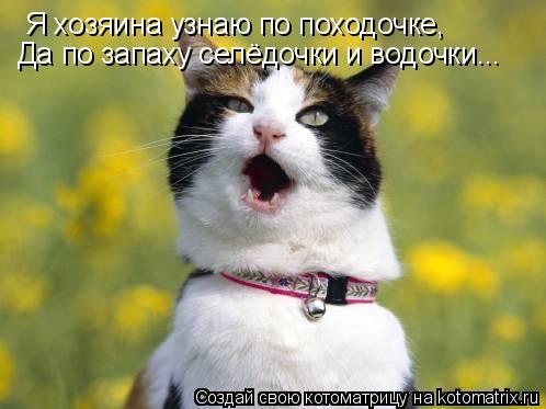 Котоматрица: Я хозяина узнаю по походочке, Да по запаху селёдочки и водочки...
